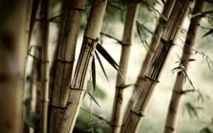 bambu natural