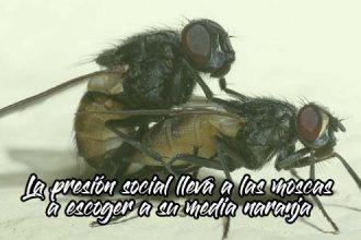 media-naranja-moscas